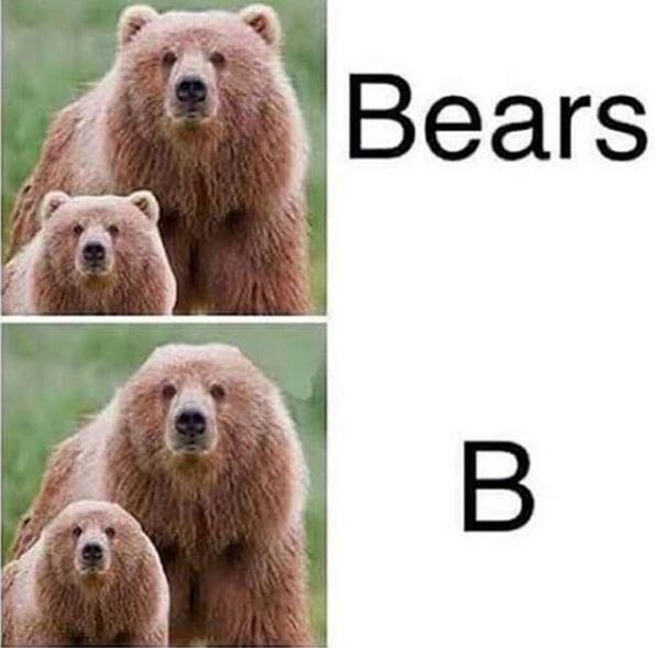Mammal - Bears