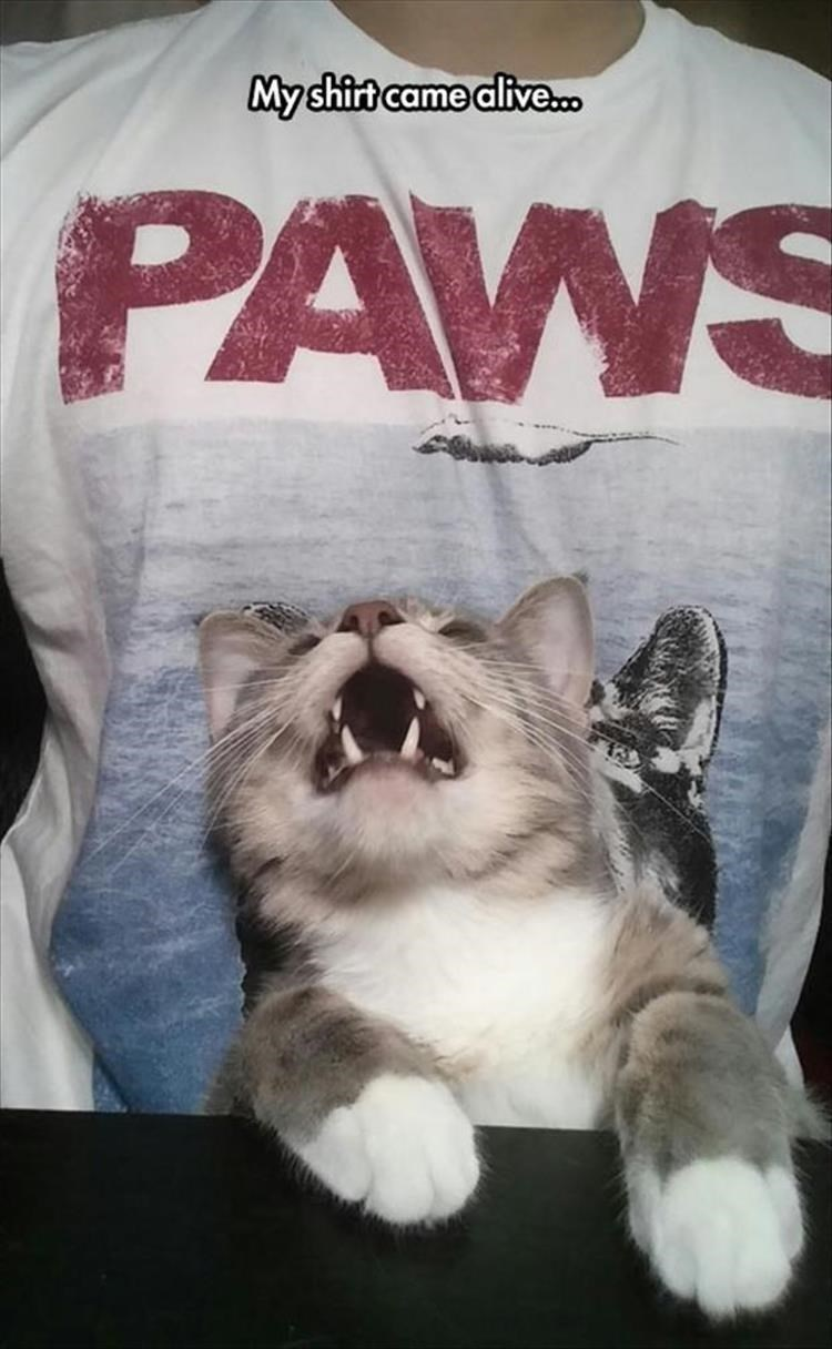 My shirt came alive... Jaws movie poster parody paws and tiny kitten
