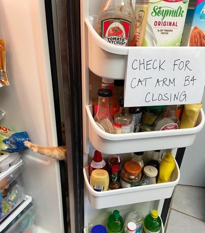 Refrigerator - Séymlk CLASS ORIGINAL 7g SOY POWERED PROTEIN TOMATO TCHUP CHECK FOR CAT ARM B4 CLOSING Sesaime