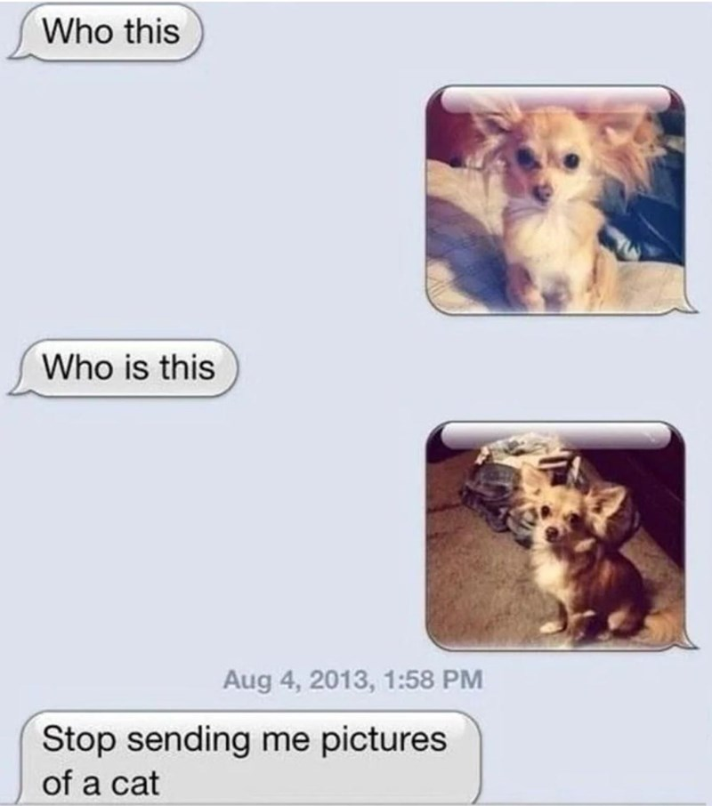 Text - Who this Who is this Aug 4, 2013, 1:58 PM Stop sending me pictures of a cat