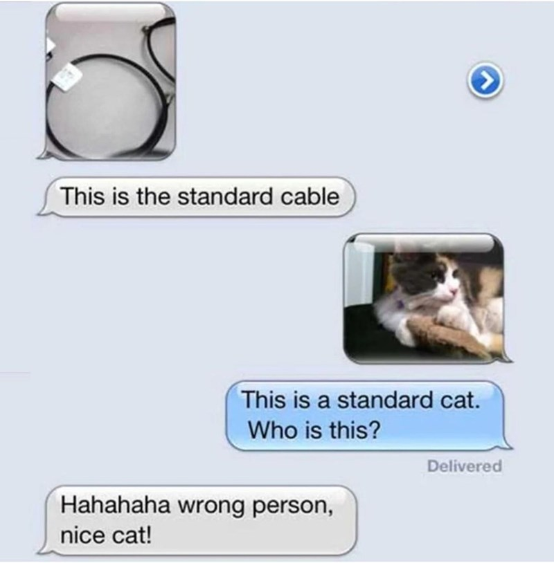 Text - This is the standard cable This is a standard cat. Who is this? Delivered Hahahaha wrong person, nice cat!