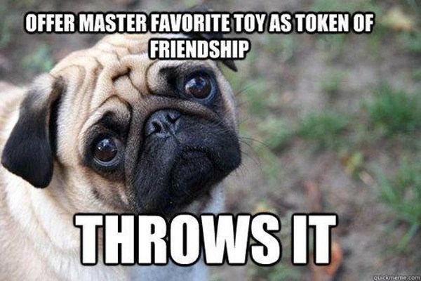 Dog - OFFER MASTER FAVORITE TOY AS TOKEN OF FRIENDSHIP THROWS IT Suickmemecom