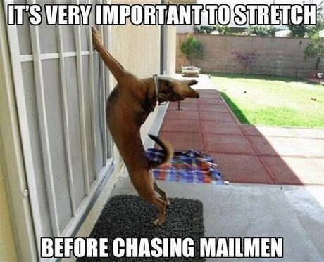 Dog - IT'S VERY IMPORTANT TO STRETCH BEFORE CHASING MAILMEN