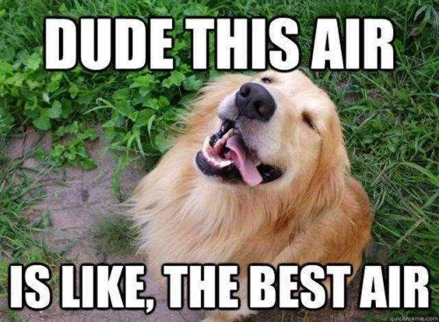 Dog breed - DUDE THIS AIR IS LIKE, THE BEST AIR neme com