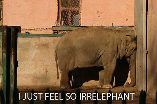 Terrestrial animal - I JUST FEEL SO IRRELEPHANT