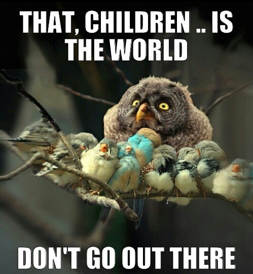 Bird - THAT, CHILDREN . IS THE WORLD DON'T GO OUT THERE