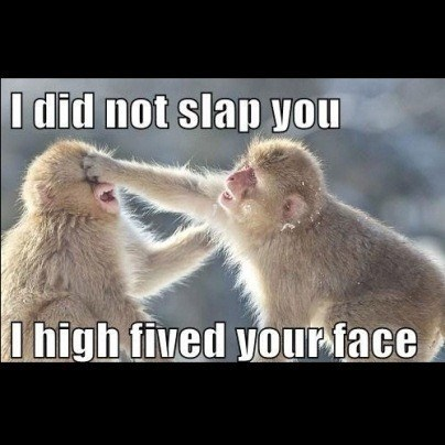 Rhesus macaque - I did not slap you I high fived your face