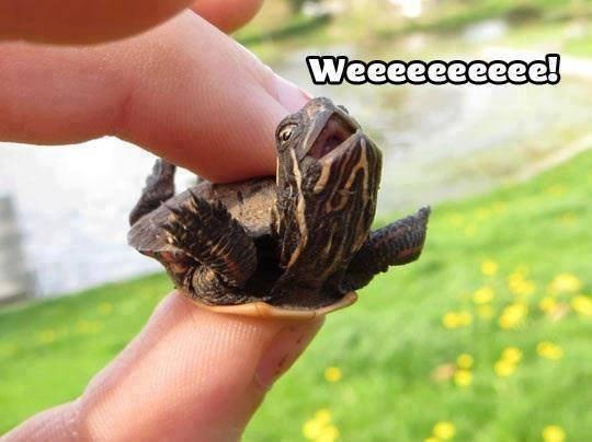 Hand - Weeeeeeeeee!
