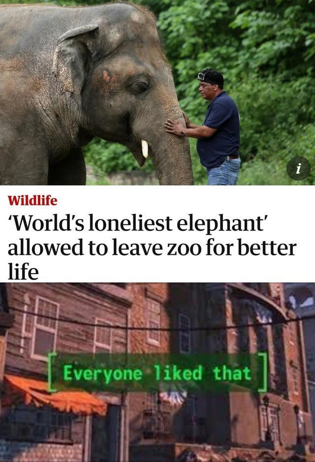 Elephant - i Wildlife 'World's loneliest elephant' allowed to leave zoo for better life Everyone liked that