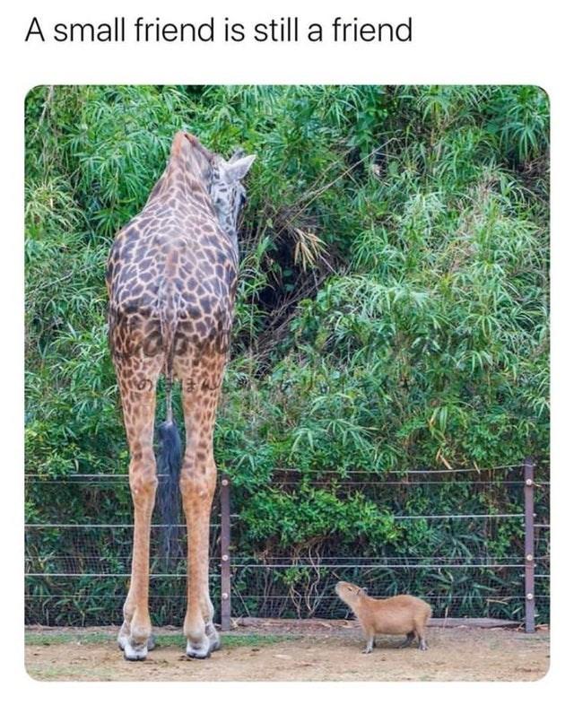 Terrestrial animal - A small friend is still a friend