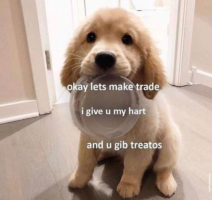 Dog - okay lets make trade i give u my hart and u gib treatos