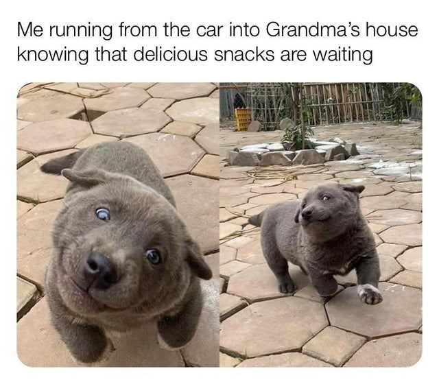 Vertebrate - Me running from the car into Grandma's house knowing that delicious snacks are waiting