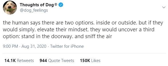 Text - Thoughts of Dog® @dog_feelings the human says there are two options. inside or outside. but if they would simply. elevate their mindset. they would uncover a third option: stand in the doorway. and sniff the air 9:00 PM · Aug 31, 2020 - Twitter for iPhone 14.1K Retweets 944 Quote Tweets 150K Likes