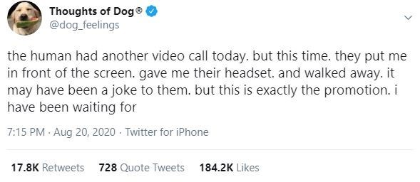 Text - Thoughts of Dog® @dog_feelings the human had another video call today. but this time. they put me in front of the screen. gave me their headset. and walked away. it may have been a joke to them. but this is exactly the promotion. i have been waiting for 7:15 PM · Aug 20, 2020 - Twitter for iPhone 17.8K Retweets 728 Quote Tweets 184.2K Likes