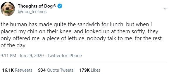 Text - Thoughts of Dog® @dog_feelings the human has made quite the sandwich for lunch. but when i placed my chin on their knee. and looked up at them softly. they only offered me. a piece of lettuce. nobody talk to me. for the rest of the day 9:11 PM Jun 29, 2020 - Twitter for iPhone 16.1K Retweets 934 Quote Tweets 179K Likes
