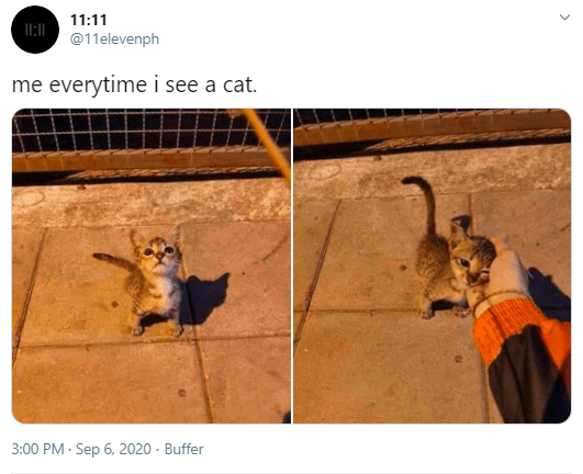 Canidae - 11:11 @11elevenph me everytime i see a cat. 3:00 PM · Sep 6, 2020 · Buffer