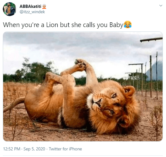 Lion - ABBAkatiti @itzz_windek When you're a Lion but she calls you Babye 12:52 PM - Sep 5, 2020 - Twitter for iPhone