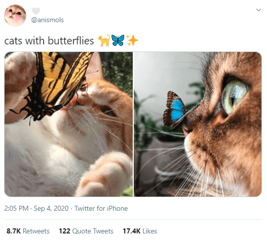 Whiskers - @anismols cats with butterflies 2:05 PM - Sep 4, 2020 · Twitter for iPhone 8.7K Retweets 122 Quote Tweets 17.4K Likes