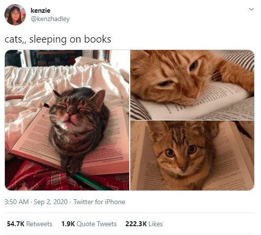 Cat - kenzie @kenzhadley cats, sleeping on books 3:50 AM - Sep 2, 2020 - Twitter for iPhone 54.7K Retweets 1.9K Quote Tweets 222.3K Likes