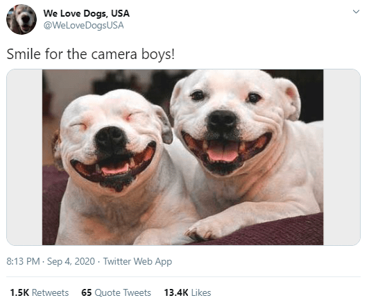 Dog breed - We Love Dogs, USA @WeLoveDogsUSA Smile for the camera boys! 8:13 PM · Sep 4, 2020 · Twitter Web App 1.5K Retweets 65 Quote Tweets 13.4K Likes