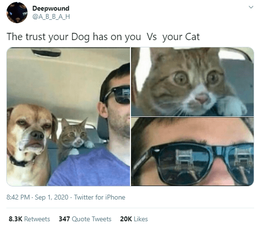 Glasses - Deepwound ФА В В А.Н The trust your Dog has on you Vs your Cat 8:42 PM - Sep 1, 2020 · Twitter for iPhone 8.3K Retweets 347 Quote Tweets 20K Likes >