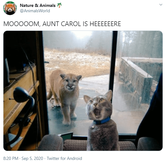 Canidae - Nature & Animals @AnimalsWorld MOO00OM, AUNT CAROL IS HEEEEEERE 8:20 PM - Sep 5, 2020 · Twitter for Android >