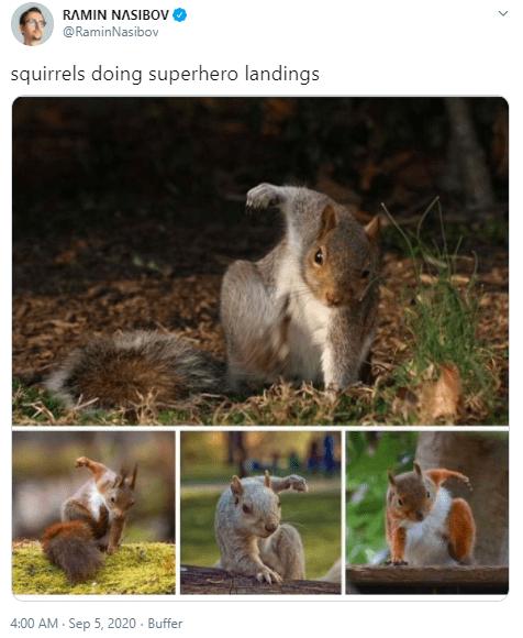 Squirrel - RAMIN NASIBOV @RaminNasibov squirrels doing superhero landings 4:00 AM - Sep 5, 2020 - Buffer >