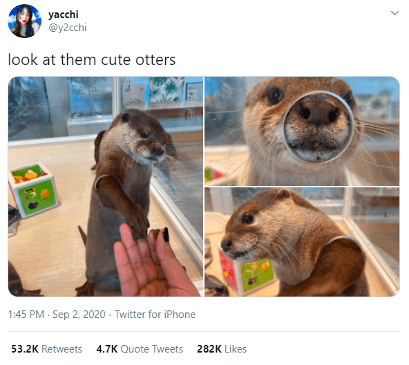 Adaptation - yacchi @y2cchi look at them cute otters 1:45 PM - Sep 2, 2020 · Twitter for iPhone 53.2K Retweets 4.7K Quote Tweets 282K Likes