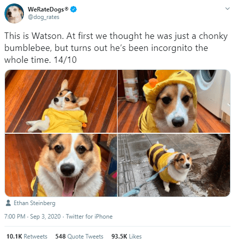 Dog - WeRateDogs® @dog_rates This is Watson. At first we thought he was just a chonky bumblebee, but turns out he's been incorgnito the whole time. 14/10 : Ethan Steinberg 7:00 PM - Sep 3, 2020 - Twitter for iPhone 10.1K Retweets 548 Quote Tweets 93.5K Likes