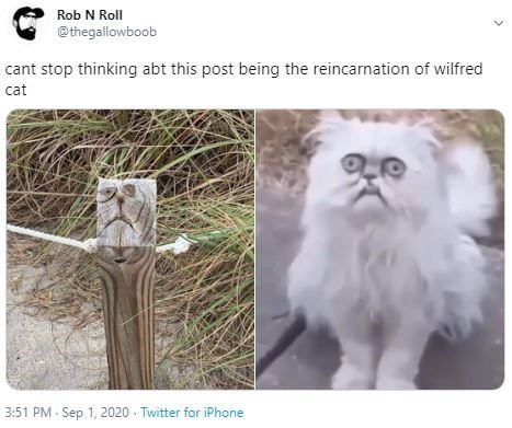 Text - Rob N Roll @thegallowboob cant stop thinking abt this post being the reincarnation of wilfred cat 3:51 PM · Sep 1, 2020 - Twitter for iPhone