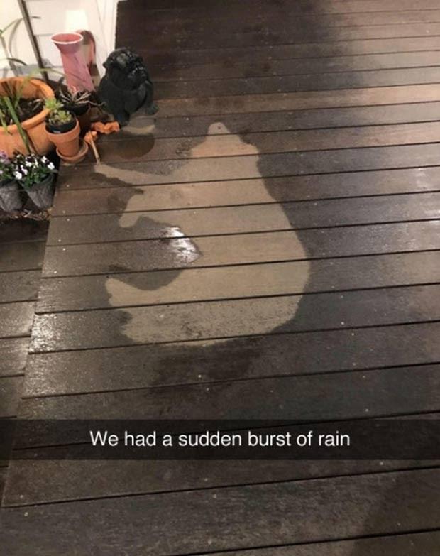 best funny memes - Floor - We had a sudden burst of rain