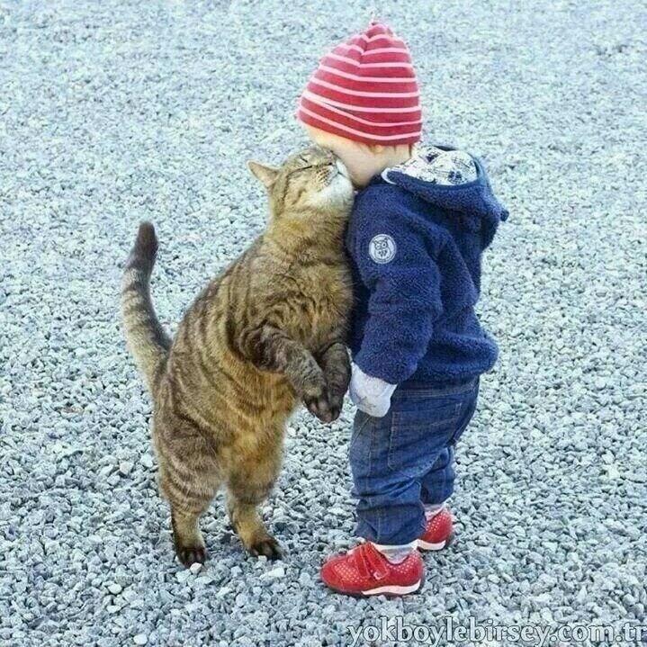 Cat - yokboylebirsey.com t