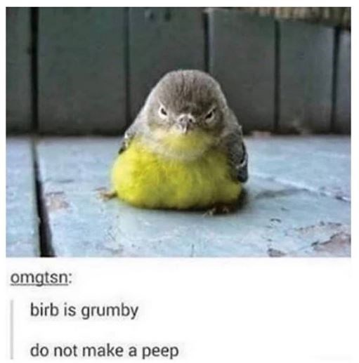 omqtsn: birb is grumby do not make a peep chonkly little bird