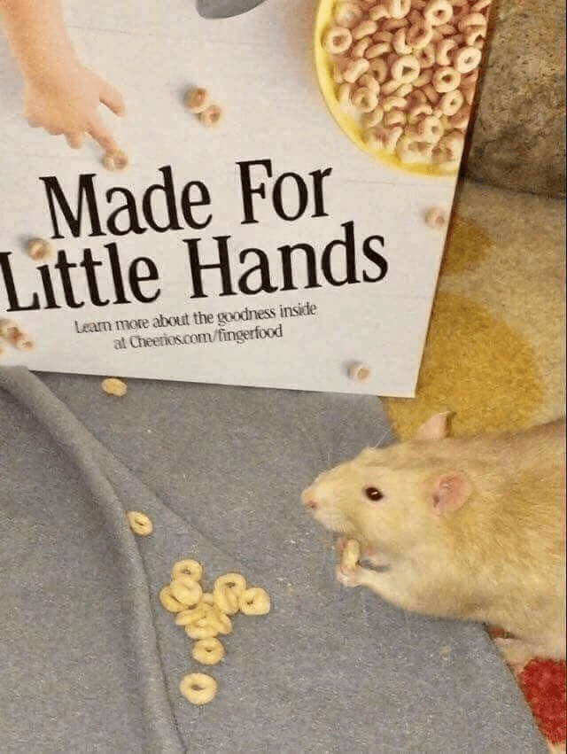 Rat - Made For Little Hands Learn more about the goodness inside at Cheerios.com/fingerfood