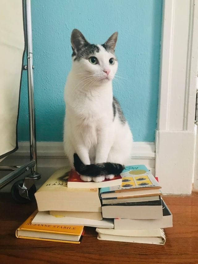 Cat - HAM Z ZANNE STABILE