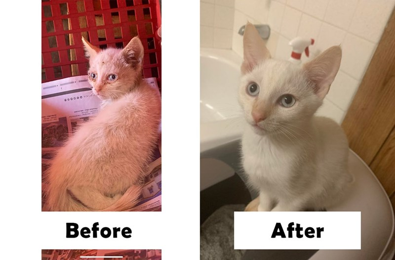 Cat - 000000 vIs Before After