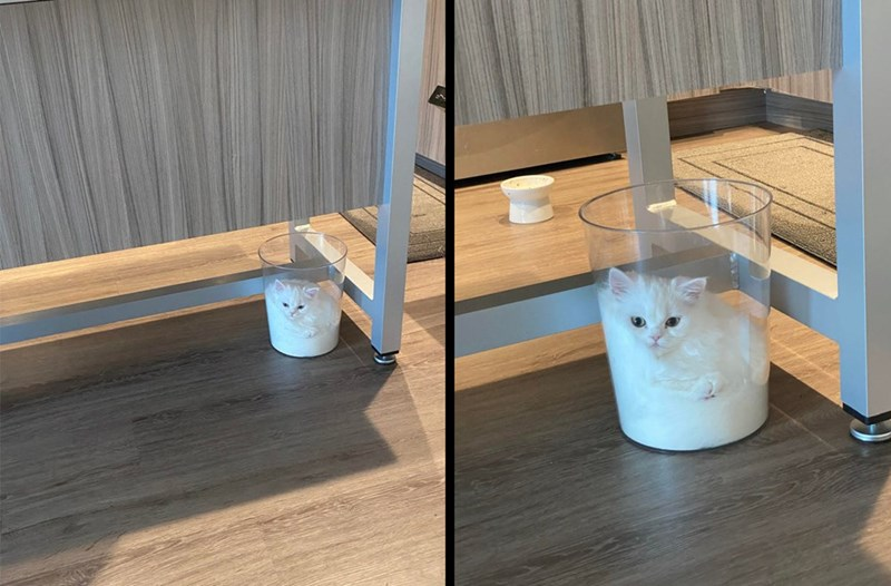 Cat - Laminate flooring