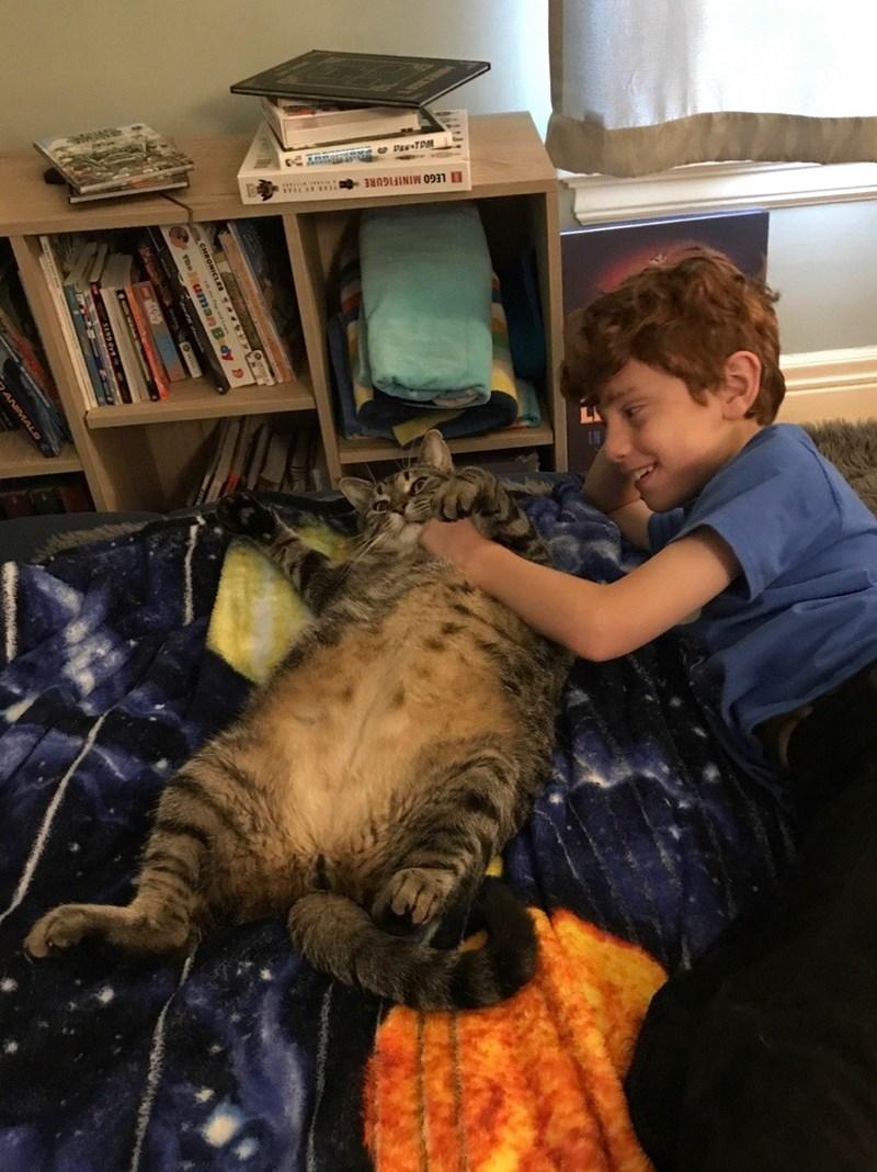 Cat - Cat - LEGO MINIFIGURE e DAN TDM The uman B dy D ANIMAL