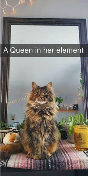 Cat - A Queen in her element
