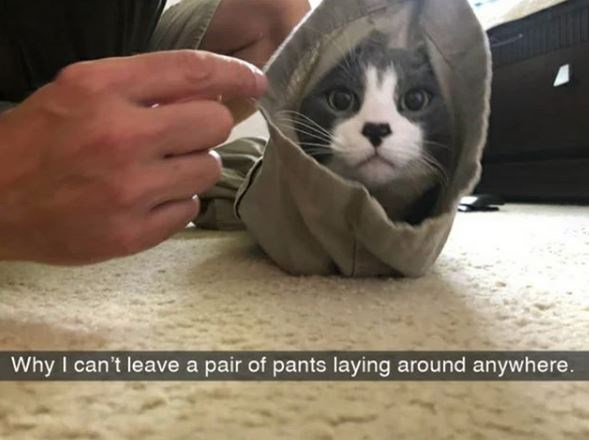 Cat - Why I can't leave a pair of pants laying around anywhere.