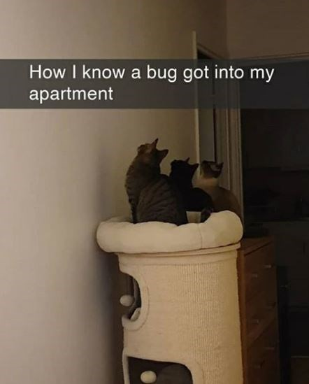 Cat - How I know a bug got into my apartment