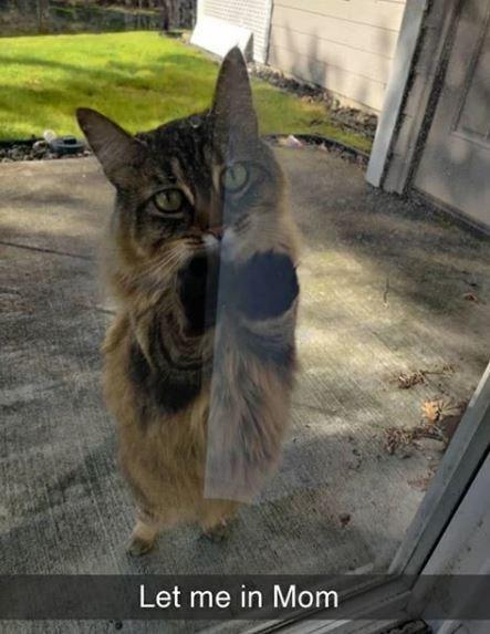 Cat - Let me in Mom