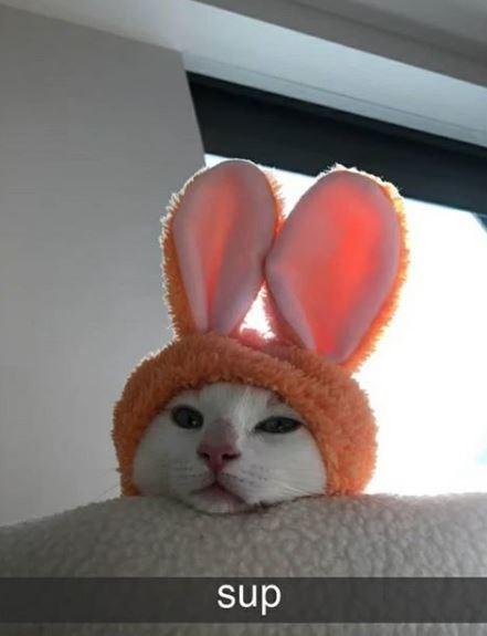 Rabbit - sup