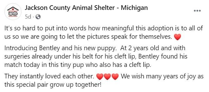 Text - Jackson County Animal Shelter - Michigan 5d - O It's so hard to put into words how meaningful this adoption is to all of us so we are going to let the pictures speak for themselves. Introducing Bentley and his new puppy. At 2 years old and with surgeries already under his belt for his cleft lip, Bentley found his match today in this tiny pup who also has a cleft lip. They instantly loved each other. this special pair grow up together! We wish many years of joy as