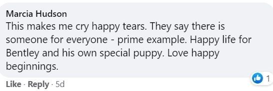 Text - Marcia Hudson This makes me cry happy tears. They say there is someone for everyone - prime example. Happy life for Bentley and his own special puppy. Love happy beginnings. Like · Reply · 5d