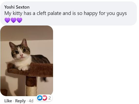 Cat - Yoshi Sexton My kitty has a cleft palate and is so happy for you guys 2 Like · Reply · 4d