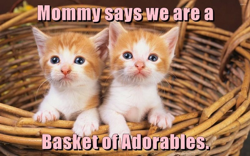 Cat - Mommy says we are a Basket of Adorables.