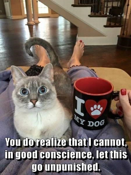 Cat - MY Y DOG in good conscience, let this go unpunished. You do realize that I cannot,