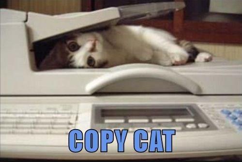 Cat - COPY CAT