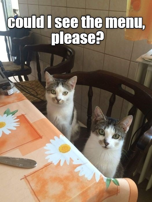 Cat - could I see the menu, please?